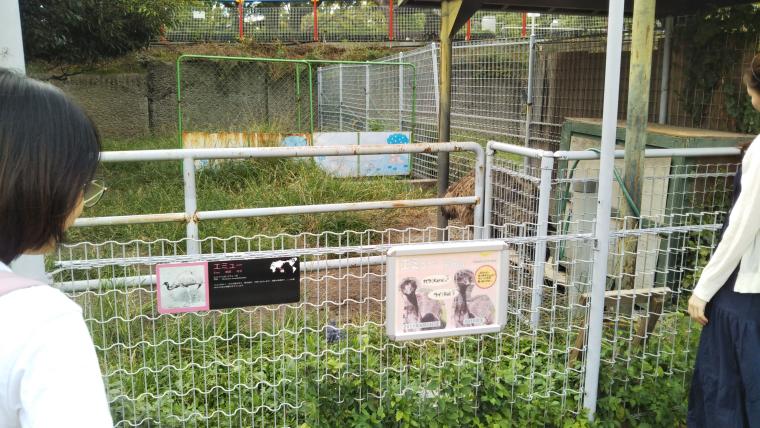 天王寺動物園 エミュー