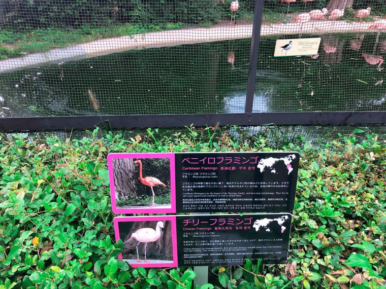 天王寺動物園 フラミンゴ 看板