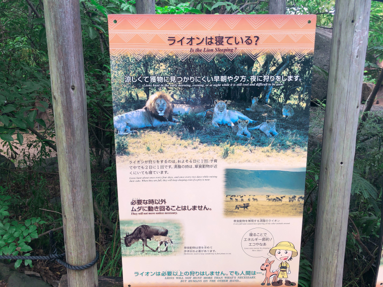 天王寺動物園 ライオン 看板