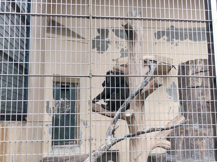 天王寺動物園 サル