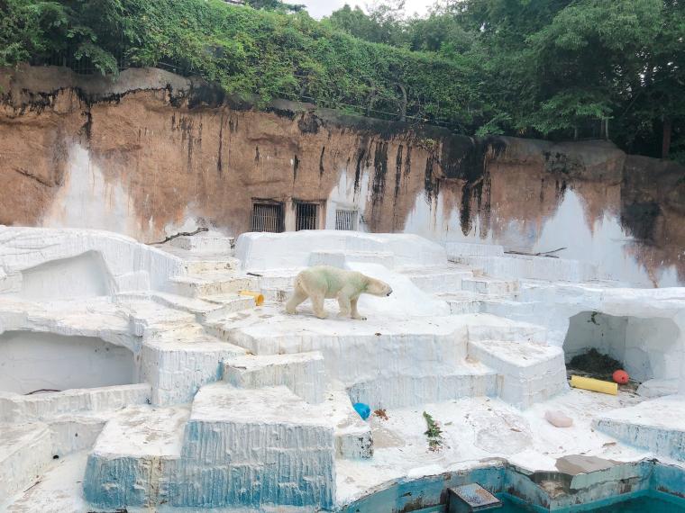 天王寺動物園 シロクマ