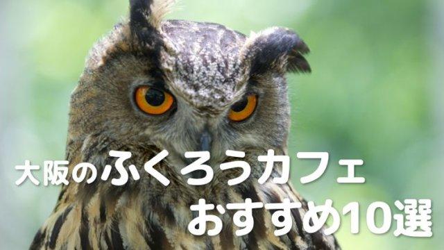 大阪のふくろうカフェでもふもふ癒やされよう!おすすめ10選