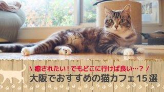 大阪でおすすめの猫カフェ15選