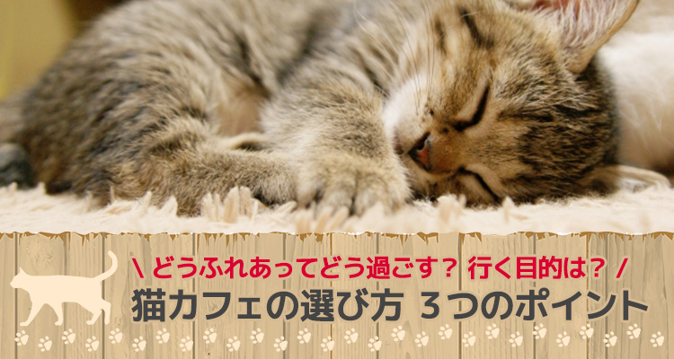 猫カフェの選び方 3つのポイント