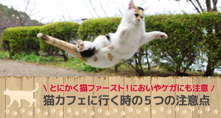 猫カフェに行く時の5つの注意点