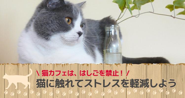 猫に触れてストレスを軽減しよう