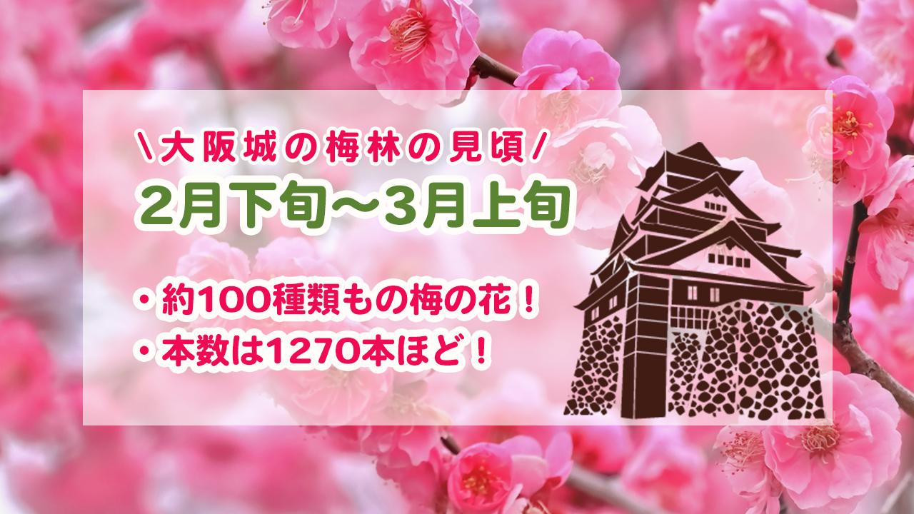 大阪城の梅林の見頃