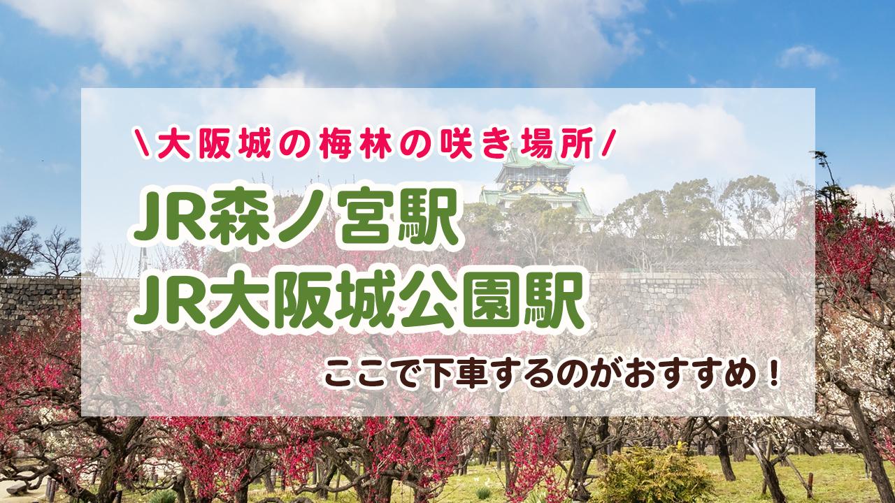 梅林の向こうに見える大阪城